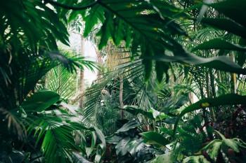 Evénement : Internet, une jungle numérique